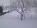 jardin hiver 1